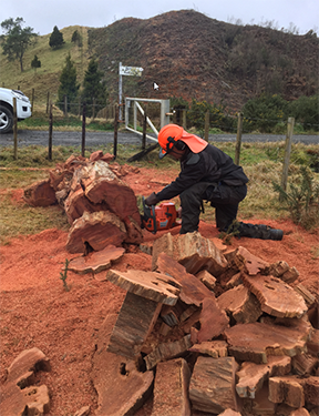 Chainsaw Training in the Upper North Island